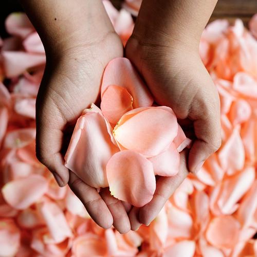 Salmon Pink Rose Petals