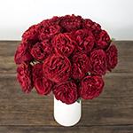 Samarcanda Red Garden Wholesale Rose Bunch in a vase