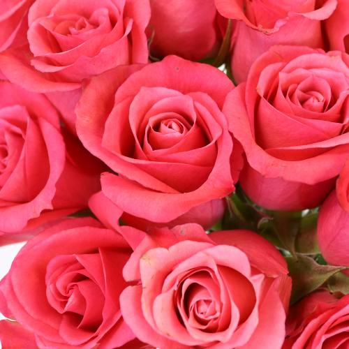 Dark Pink Delight Sweetheart Roses