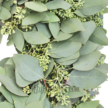 Fresh Seeded Eucalyptus Wreaths