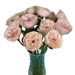 Blush Garden Rose Bulk Flower