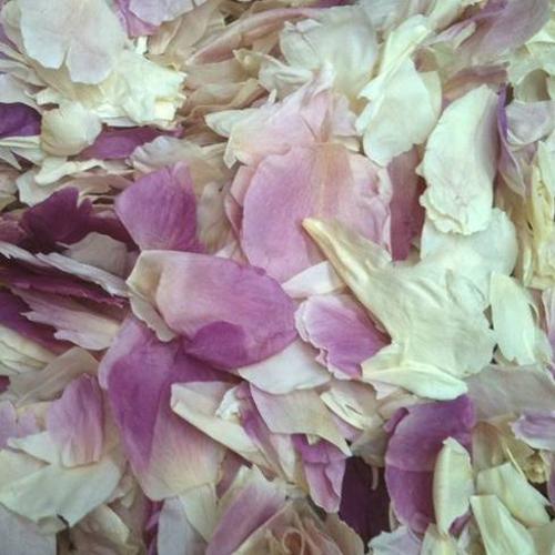 Shabby Chic Dried Peony Flower Petals