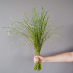 Wholesale greenery fresh cut shaker grass filler flowers sold as bulk