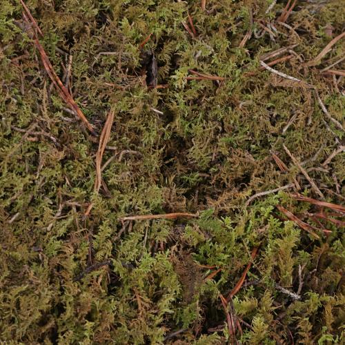 Fresh Sheet Moss