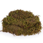 Spanish Moss - Buy Bulk FREE SHIPPING!