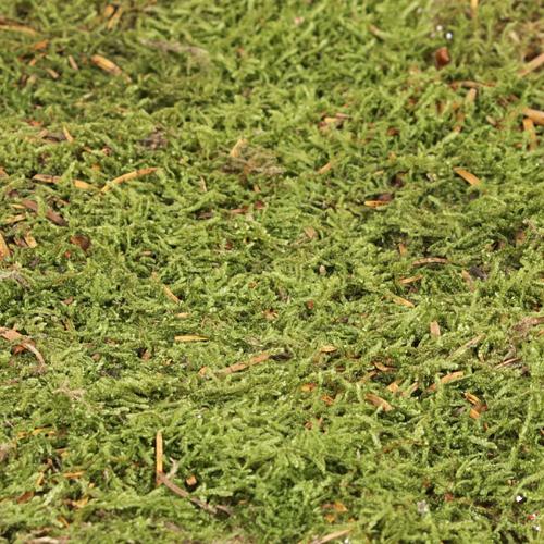 Natural Dry Sheet Moss