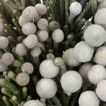 Silver Brunia Balls