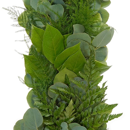 Silver Dollar, Leather Leaf, Plumosa and Salal Greens Garland