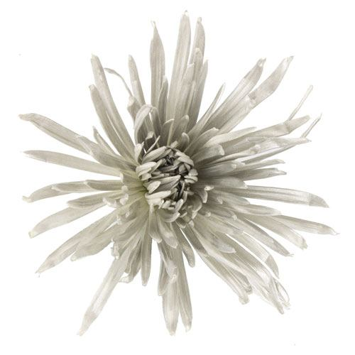 Silver Snowflake Airbrushed Spider Mum