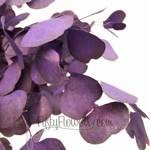 Purple Tinted Silver Dollar Eucalyptus