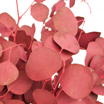 Red Tinted Silver Dollar Eucalyptus