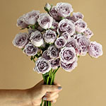 Silver Mikado Lavender Wholesale Rose Bunch in a hand