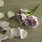 Silver Mikado Lavender Rose Stem