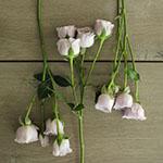 Silver Mikado Lavender Rose Bunch