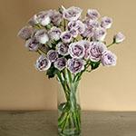 Silver Mikado Lavender Wholesale Roses In a vase