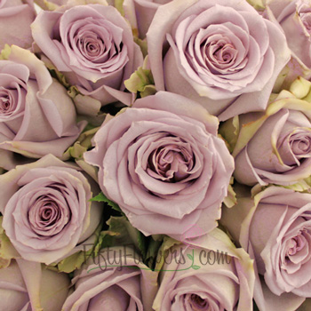 Silverstone Antique Lavender Rose