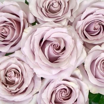 Mirror Ball Lavender Rose
