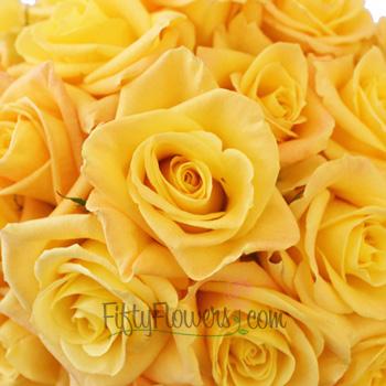 Skyline Yellow Rose