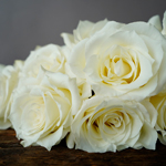 Wholesale priced snow bliss rose
