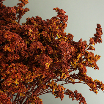 Brown Spice Tinted Solidago Flowers