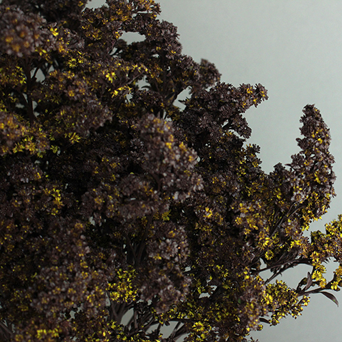 Chocolate Tinted Solidago Flower