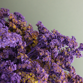 Amethyst Purple Tinted Solidago Flowers