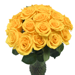 Wholesale Yellow Roses Yellow Coral