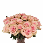 Light Pink Rose Sophie