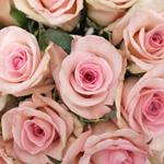 Light pink rose DIY wedding flowers
