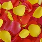 White Fresh Rose Petals Wholesale