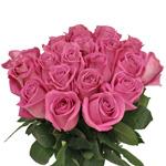 Bicolor Rose Latin Ambiance