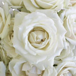 Creamy White Spray Rose Express Delivery