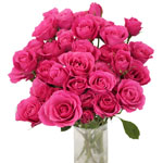 bulk hot pink spray roses