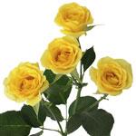 bulk yellow spray roses