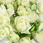 White Wedding Spray Rose Flower Pack