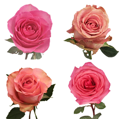 Standard Pink Roses
