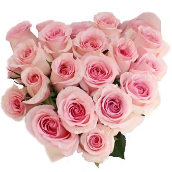 Fresh Cut Rose Sweet Pink