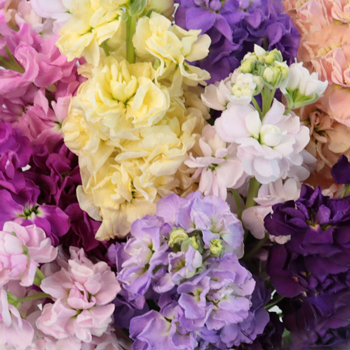 Assorted Wholesale Stock Flower
