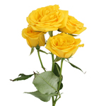 bulk yellow spray roses