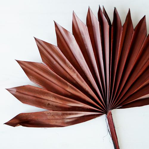 Dried Mocha Sun Palms