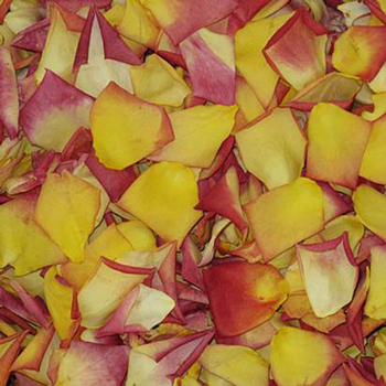 Sunset in the Park Dried Rose Petals