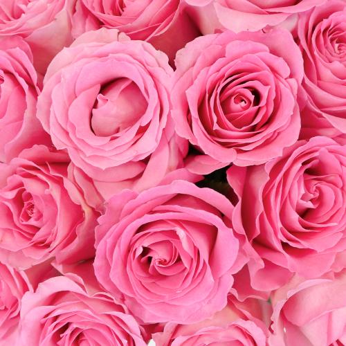 Strawberry Taffy Sweetheart Roses