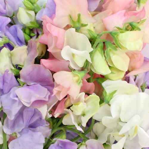 Sweet Pea Flowers for DIY Weddings