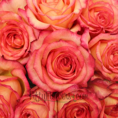 Raspberry Melon Rose