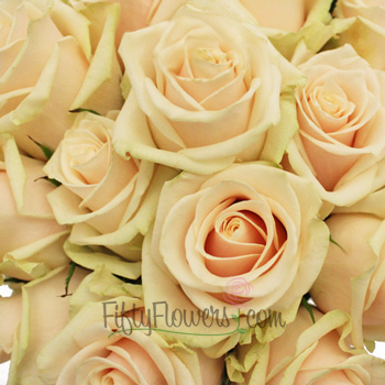 Creamy Peach Talea Rose