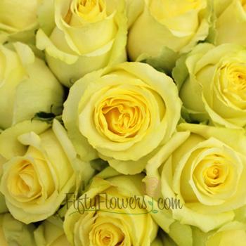 Tara Yellow Roses