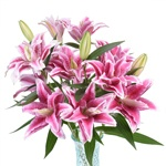 Deep Pink Oriental Lily Flower