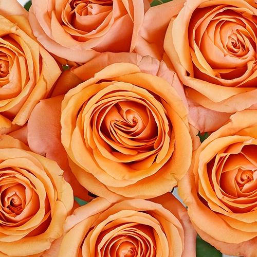 Melon Ice Wholesale Rose