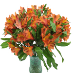 Terracotta Orange Peruvian Lily Flower in a Vase