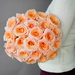 Bicolor Novelty Rose Fancy Amazone